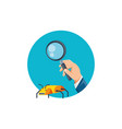 hand with magnifying glass and bug infection vector image vector image
