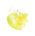 juicy ripe carambola fruit watercolor hand vector image