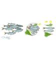 sprat sketch fish icon image of vector image vector image