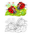 two cute ladybirds sitting on a leaf colorful vector image