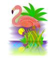 flamingo beautiful bird living south countries