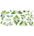 floral compositions set vector image