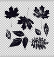 set leaves different vegetation vector image
