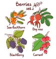 berries set 2 vector image vector image