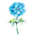 Cyanic watercolor anemone Beautiful flower vector image vector image