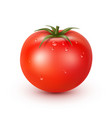 tomato fresh big red ripe with water drops vector image vector image