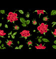 seamless pattern with red roses beautiful vector image