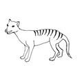 tasmanian wolf thylacinus cynocephalus engraved vector image vector image