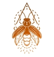 Firefly and geometric elements vector image