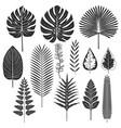 Tropical leaf silhouette set