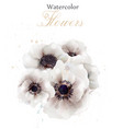white poppies flowers isolated beautiful vector image vector image