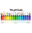 a ph scale on white background vector image vector image
