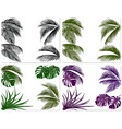 sets of colorful leaves of tropical palm trees vector image vector image