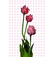 Hand drawn bouqet of tulip vector image