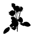 beautiful silane white and black roses isolated vector image vector image