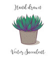 cute hand drawn colorful succulent astroloba tenax vector image vector image