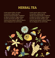 herbal tea article vector image vector image