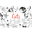 card with playing cats different breeds cat in vector image