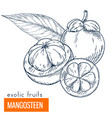Mangosteen hand drawn vector image