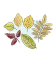 Sketch of autumn leaves for your design vector image vector image