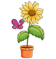 A sunflower plant in a pot vector image vector image