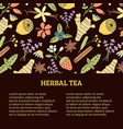 herbal tea banner vector image vector image