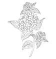 ink sketch hydrangea flower vector image vector image