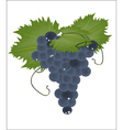 realistic grapes on a white background vector image