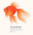 high detailed gold fish vector image
