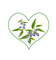 Branch of Chebulic Myrobalans in Heart Shape vector image vector image