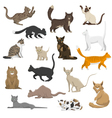Domestic Cat Breeds Flat Icons Collection vector image vector image