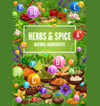 vitamin contents in herbs spices food seasonings vector image