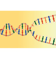 separated dna strands vector image