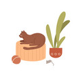 cute cat lying at home adorable kitty with toys vector image