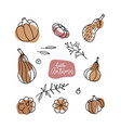 decorative pumpkins various shapes set linear vector image