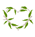 Evergreen Leaves in A Heart Shape Wreath vector image vector image