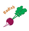 isolated radish icon vector image vector image