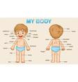my body vector image vector image
