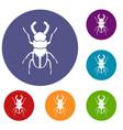 rhinoceros beetle icons set vector image vector image