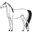 beautiful horse vector image vector image