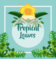 flower natural foliage exotic label tropical vector image