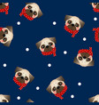 pug dog with red scarf on navy blue background vector image