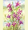 watercolor bouquet of aquilegia vector image vector image
