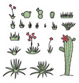 set of plants - flowers and cactus vector image