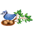 A blue bird at the branch of a tree with a nest vector image vector image