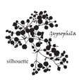 Branch of beautiful hand-drawn silhouette vector image vector image