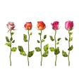 Colorful roses set flowers EPS 10 vector image vector image
