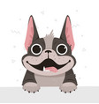 a french bulldog in a flat style vector image vector image