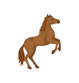 brown horse rearing up animal with hooves vector image