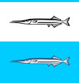 garfish isolated on white background vector image